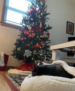 Christmas tree and sleeping kitty