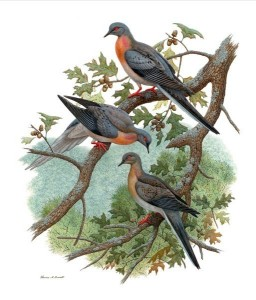 thomas a bennett pigeons