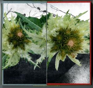 A Midsummer Botanical (by) Bea Nettles / Kohler Art Library